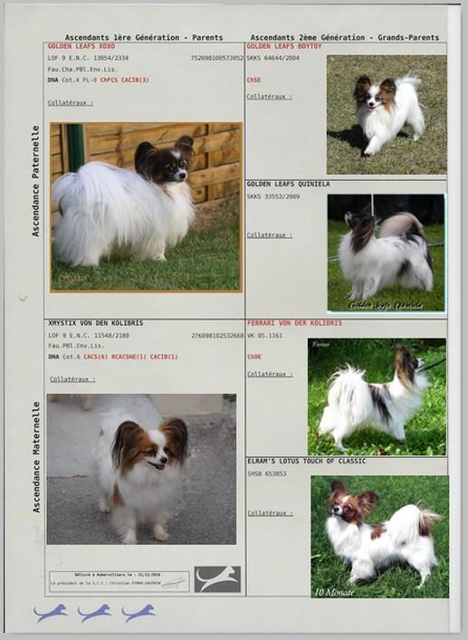 Pedigree de lady 1