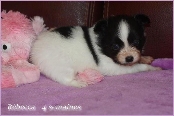 Rebecca 4 semaines 5