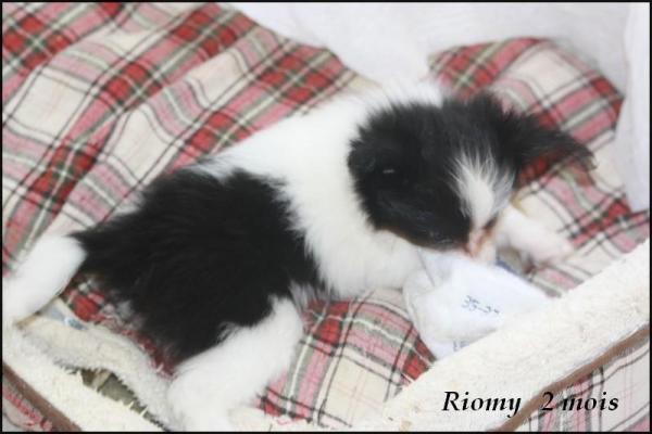 Riomy 2 mois 6