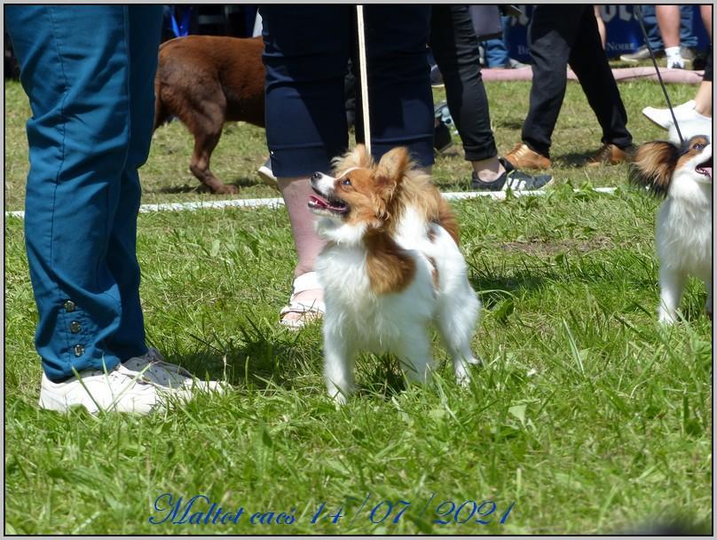 Romane puppy 14 07 2021 2