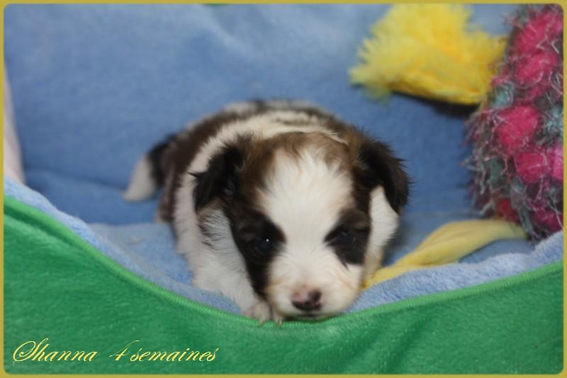 Shanna 4 semaines 5